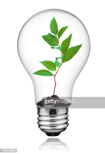 Bulb with green plant growing inside showing energy concept