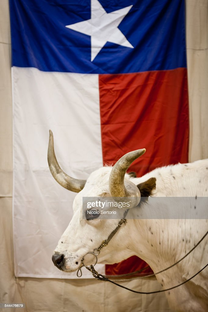 Bull agains Texas flag