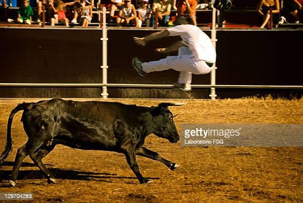 Bull at bullfights