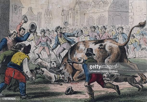 Bull Baiting Print London 1816