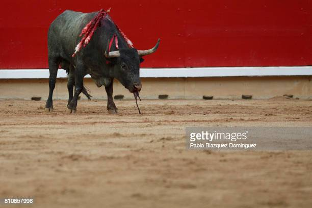 A bull from Jose Escolar Gil's fighting bulls bleeds at the end of Spanish bullfighter Eugenio de Mora performance during a bullfight on the third...