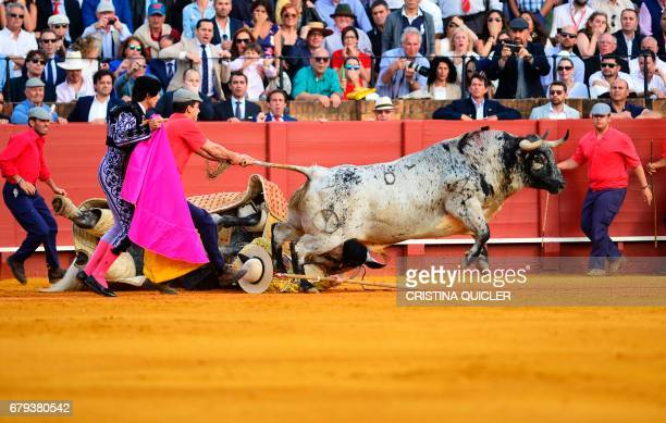 A bull is pulled after throwing a 'picador' and his horse on the ground during a bullfight at the Maestranza bullring in Sevilla on May 5 2017 / AFP...