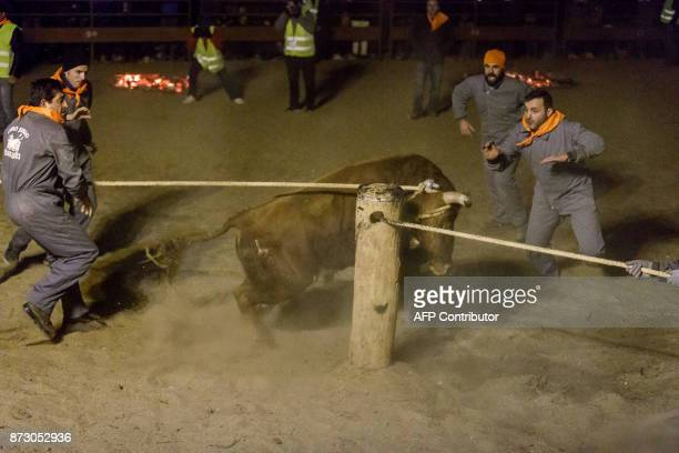 A bull is tied to a pole amid a square during the 'Toro de Jubilo' festival in Medinaceli near Soria Spain on November 11 2017 The Jubilee Bull of...