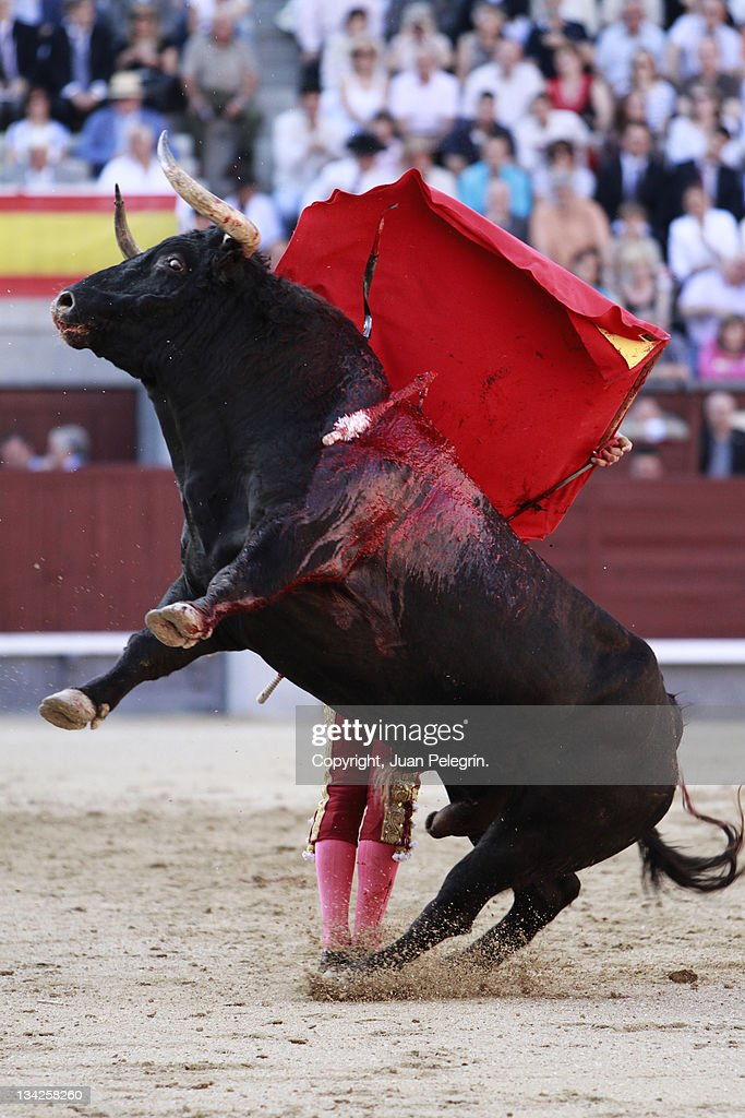 Bull jumping in Sales : Stock Photo