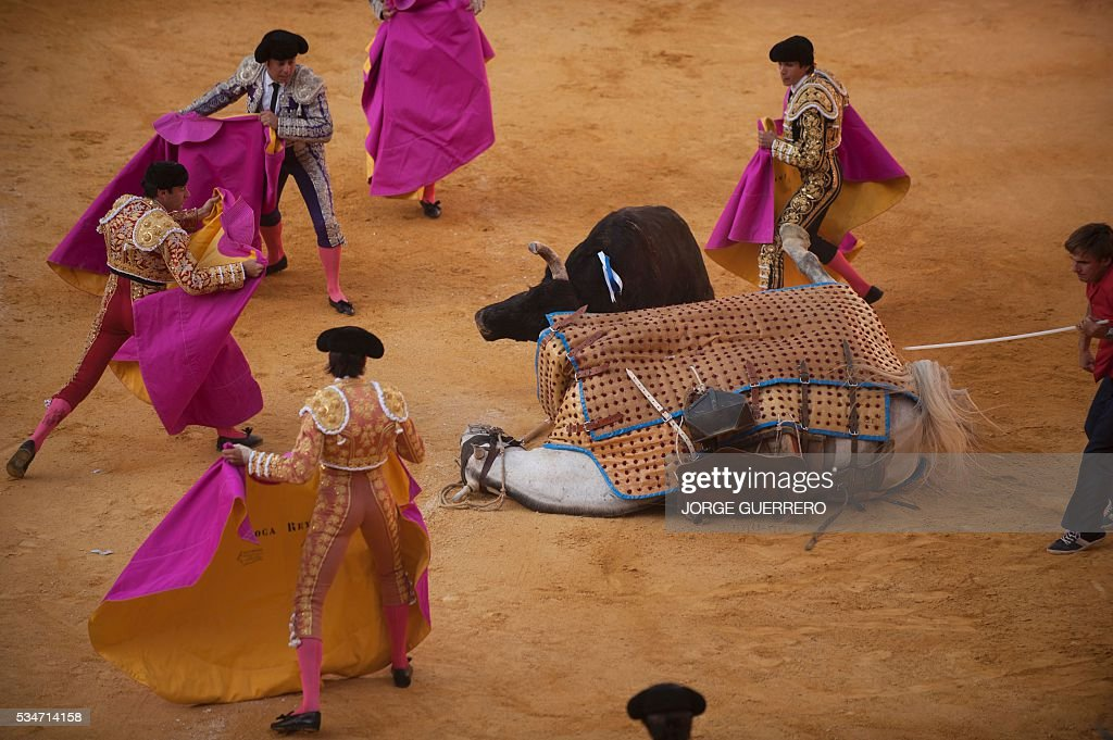 A bull knocks down a picador's horse during the Corpus bullfighting festival at a Granada bullring on May 27 2016 / AFP / JORGE GUERRERO
