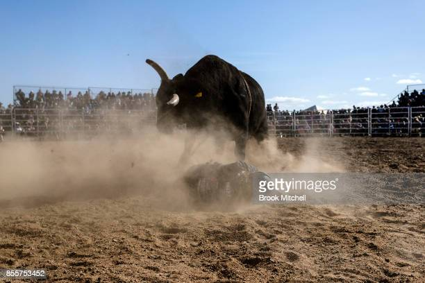 Bull rider hits the ground during the Deni Rodeo at the 2017 Deni Ute Muster on September 30 2017 in Deniliquin Australia The annual Deniliquin Ute...