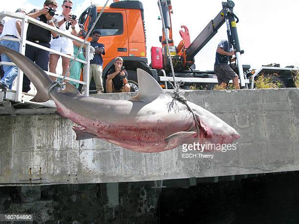 Bull Shark is caught on August 10 2012 in Reunion Island Fabien Bujon was attacked and seriously injured by a bull shark on the island of La Reunion...