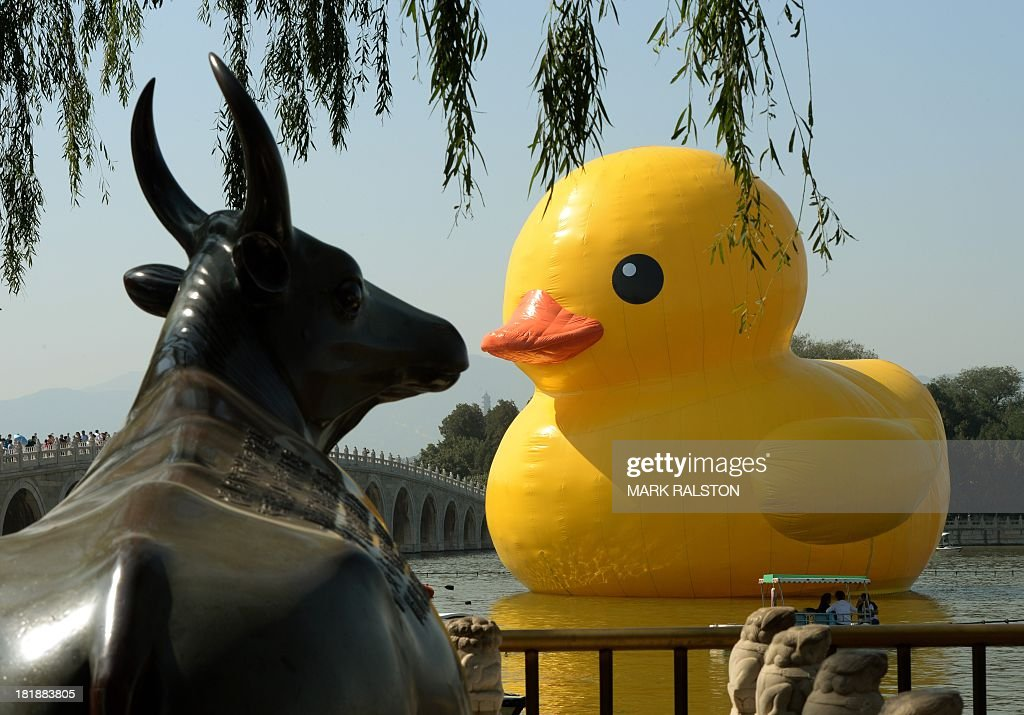 A bull statue (L) is displayed on a bank as visitors look at an 18-metre tall inflatable duck after its move to Lake Kunming at the historic Summer Palace in Beijing on September 26, 2013. The duck designed by Dutch artist Florentijn Hofman is to be displayed at Beijing's Garden Expo Park and the Summer Palace, from September to October as part of a world tour of 13 cities across 10 countries. AFP PHOTO / Mark RALSTON