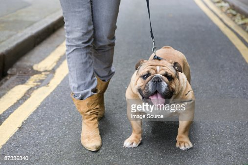 Bulldog and owner