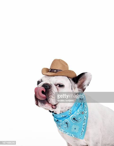 bulldog cowboy