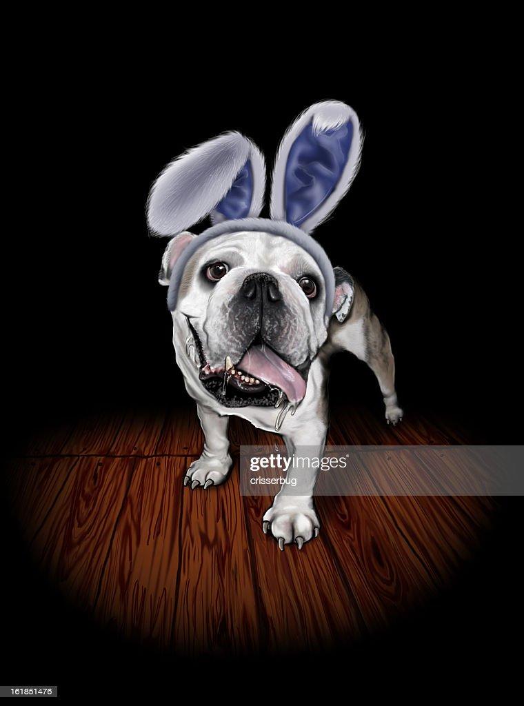 Bulldog in Bunny Ears : Stock Photo