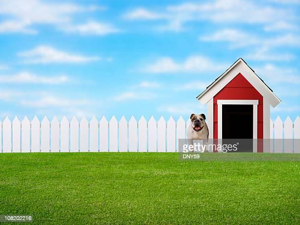 Bulldog stehen in Yard neben Doghouse