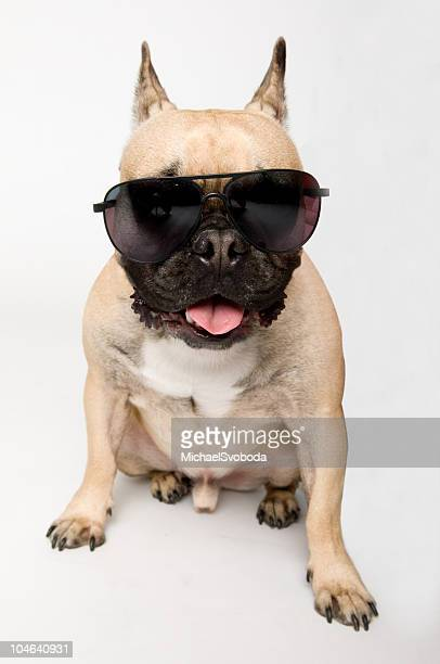 Bulldog crampons