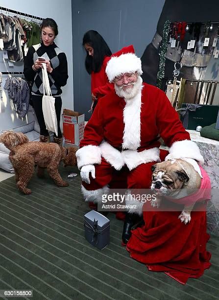 Bulldog Tonka poses for photos with Santa at the MaxBone Santa Event NYC on December 17 2016 in New York City