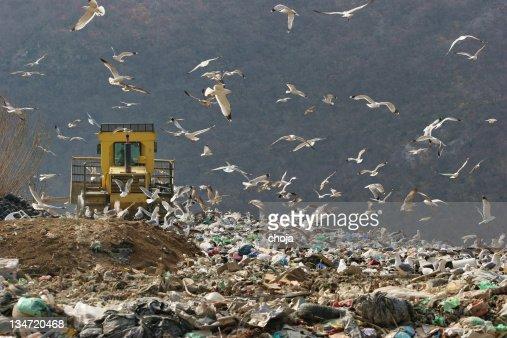 Bulldozer at work in a dump...seaguls around him