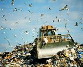 Bulldozer in garbage dump, seagull's over head