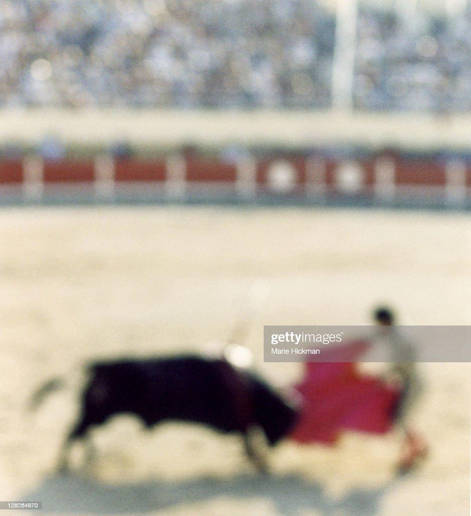 Bullfight in Ste. Marie de la Mer, France, south of France in the Camarge region : Stock Photo