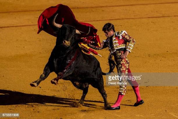 Bullfighter Julian Lopez 'El Juli' his performs with a Daniel Ruiz ranch fighting bull at La Maestranza bullring on the second day of La feria de...
