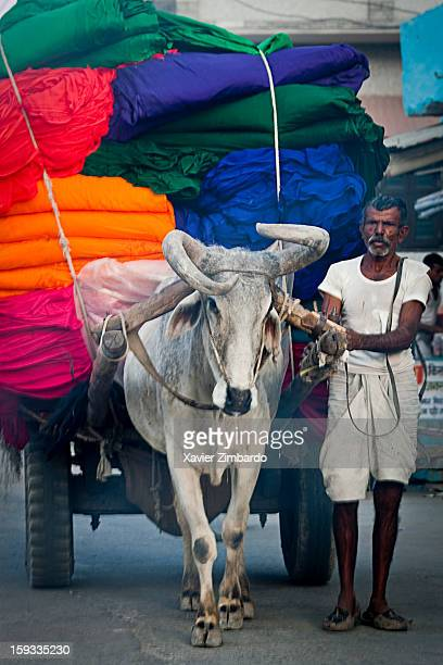 A bullock cart a twowheeled vehicle pulled by oxen is transporting dyeing fabrics from textile factories for making saris and turbans on March 23...