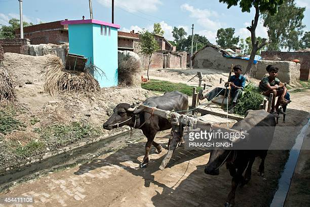 A bullock cart passes by a newly built toilet by NGO Sulabh International at Katra Sahadatgunj village in Badaun on August 31 2014 More than 100 new...