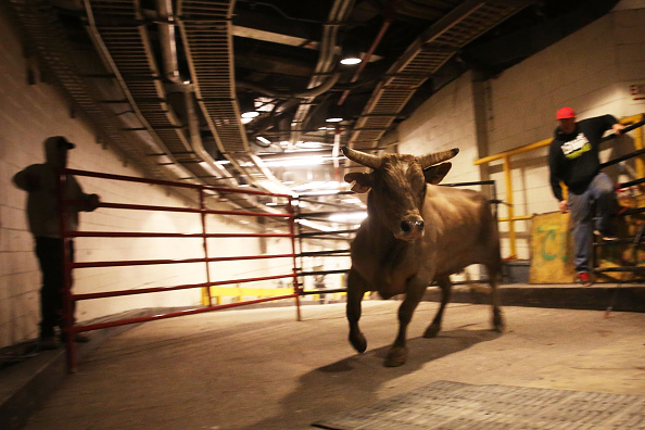 Bull Animal Stock Photos And Pictures Getty Images