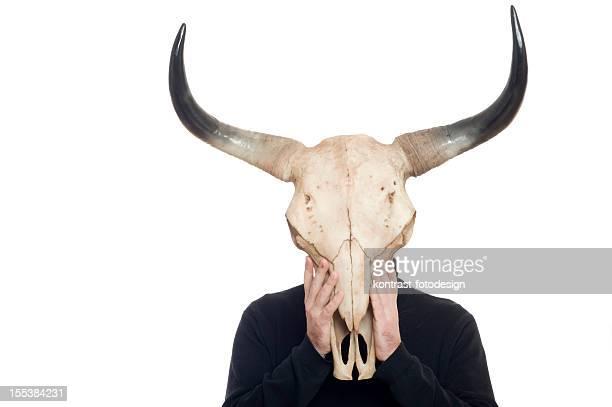 Bull´s skull