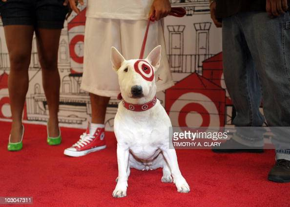 Target dog stock photos and pictures getty images What kind of dog is the target mascot
