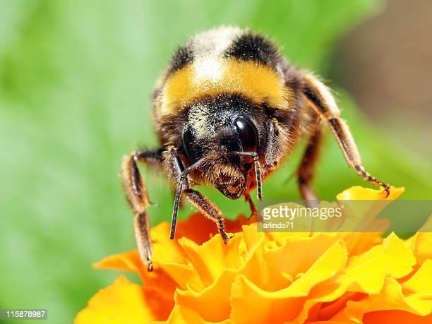 Bumblebee 5