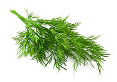 bunch fresh dill on white background