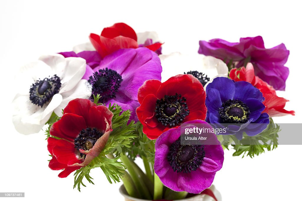 bunch of anemone flowers