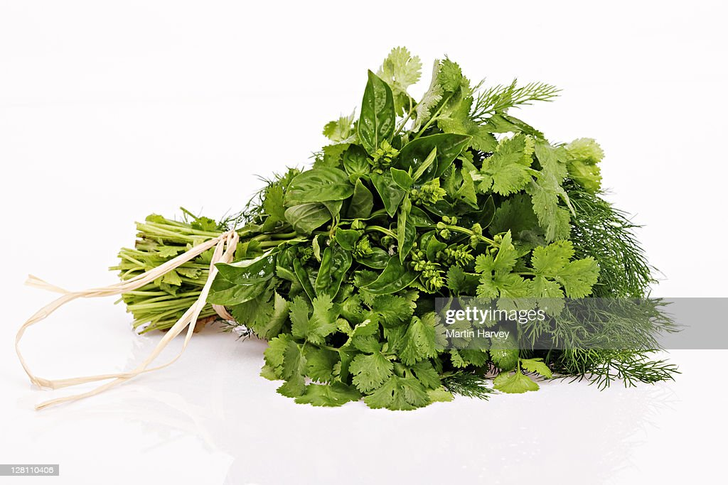 A bunch of basil, coriander, and dill tied into a bouquet on white background. : ストックフォト