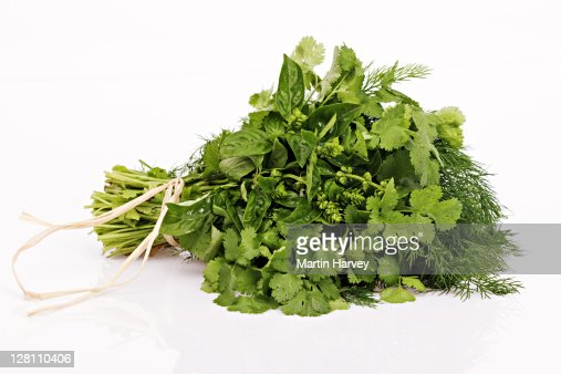 A bunch of basil, coriander, and dill tied into a bouquet on white background. : Bildbanksbilder