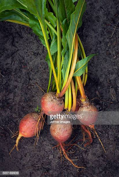 Bunch of Beetroots
