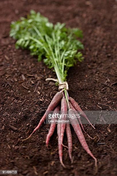 Bunch of carrots on soil