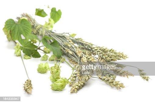 Hop und Stängel von Getreide