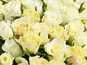 Bunch Of Cream Roses