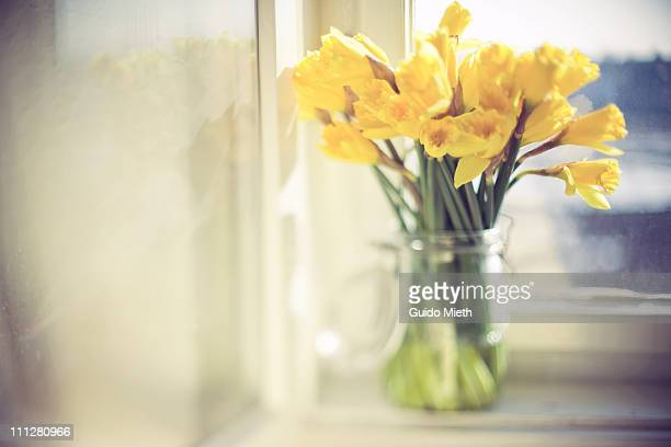 Bunch of daffodils in clear preserving glass