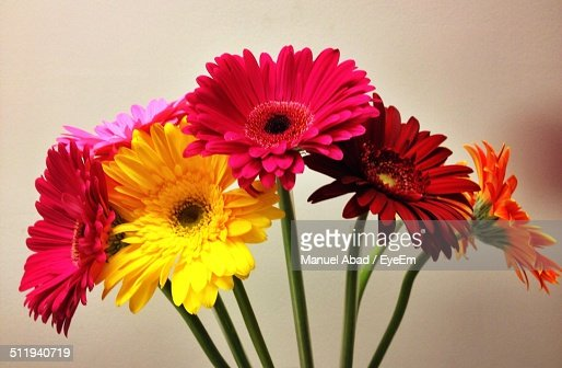 Bunch of daisy flowers