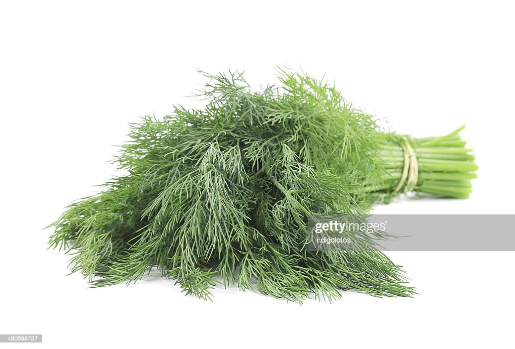 Bunch of dill. : Stock Photo