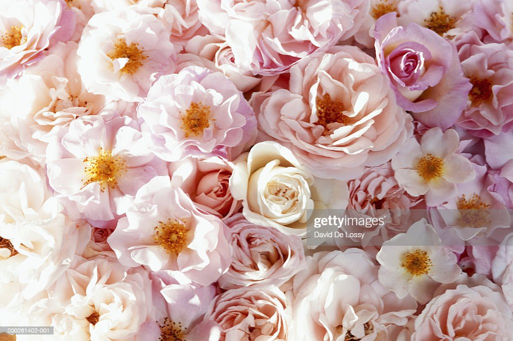 Bunch of flowers, elevated view : Stock Photo