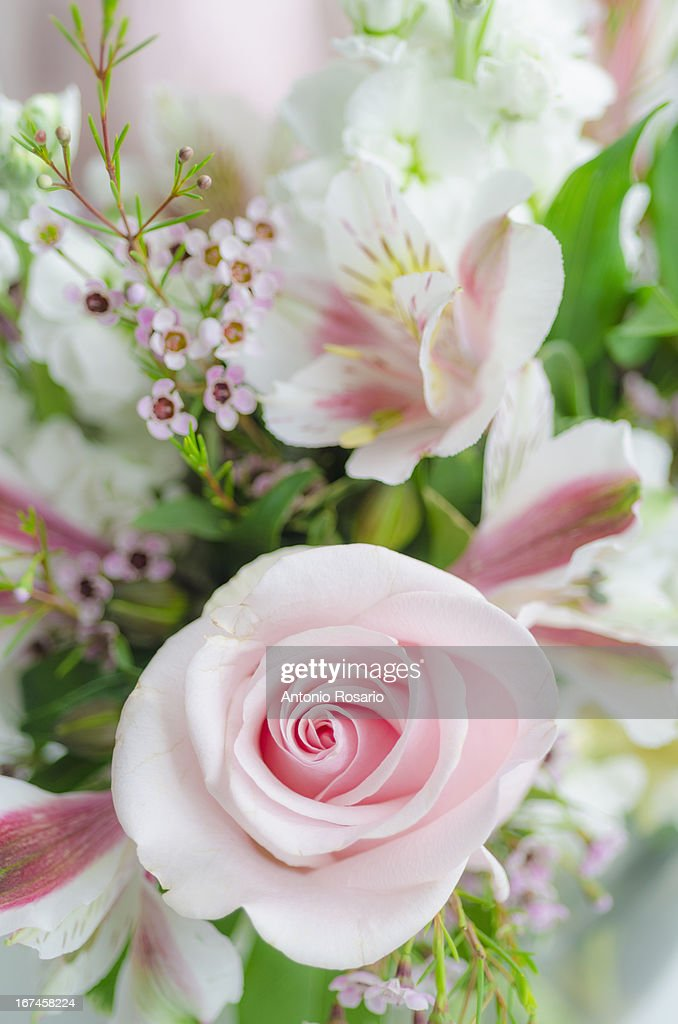 Bunch of flowers with pink rose : Stock Photo