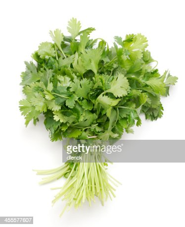 bunch of fresh cilantro