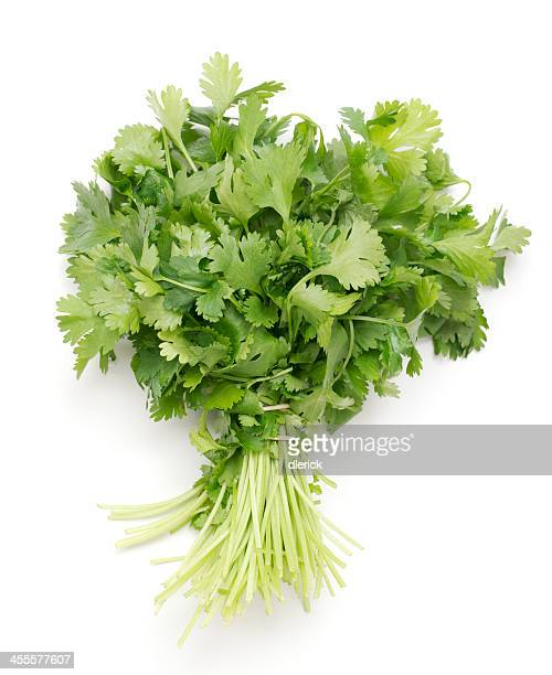 bunch of fresh cilantro