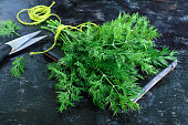 A bunch of fresh organic dill on a black vintage rustic background, tied with green twine and kitchen scissors. Freshly cut greens.