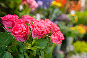 Bunch of fresh roses at flower shop