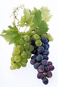 Bunch of grapes, close-up