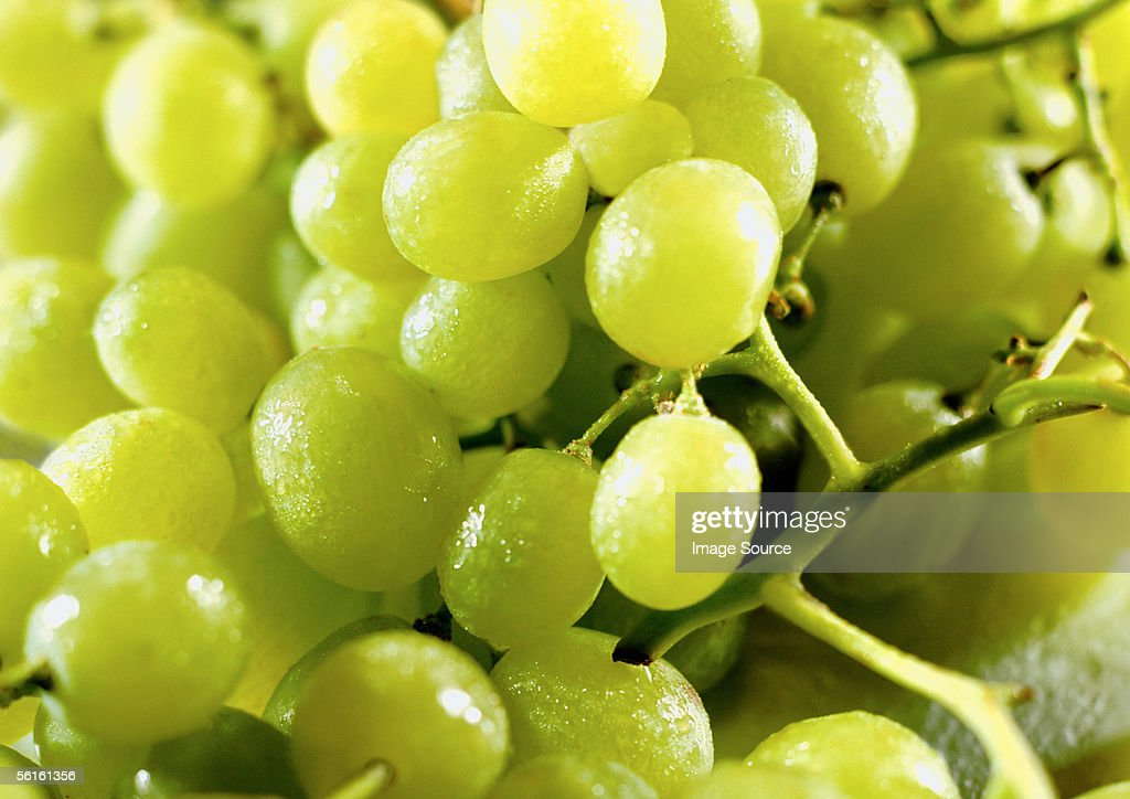 A bunch of green grapes : Stock Photo