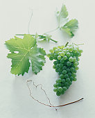 A bunch of green grapes with leaves.