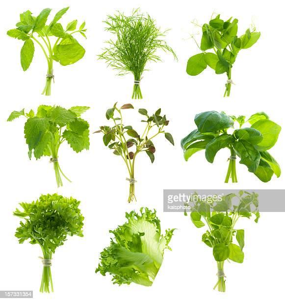 Tas de plantes (XXL