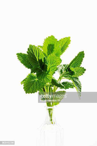 Bunch of lemon balm in bottle, close up
